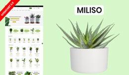 Miliso Plant & Garden Ecommrce Website Templ..