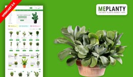 MePlantly Plant & Home Plant Ecommrce Websit..
